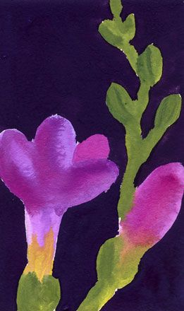 Magenta Freesia and Bud on Purple Ground - Nerys Johnson
