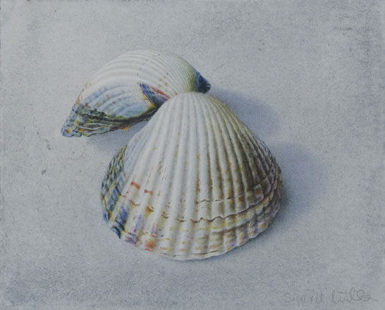 Cockle Shell - Sigrid Muller