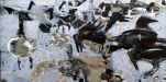Y Foryd: Crows and Brent Geese - Kim Atkinson